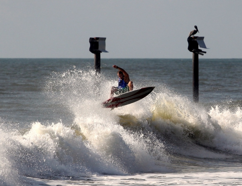 Pelicans are not impressed by boosting in the shorey at Carolina Beach, North Carolina.