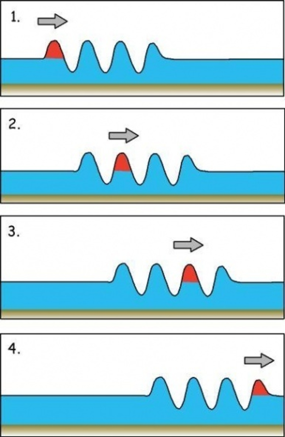 In deep water, each individual wave in a group propagates at twice the speed of the group, resulting in a constant flow of waves from the back of the group to the front.  Individual waves do not last very long