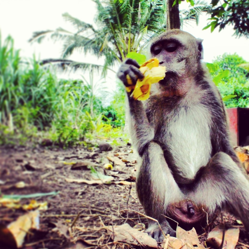 Looks like this banana is not that satisfying for our  friend here