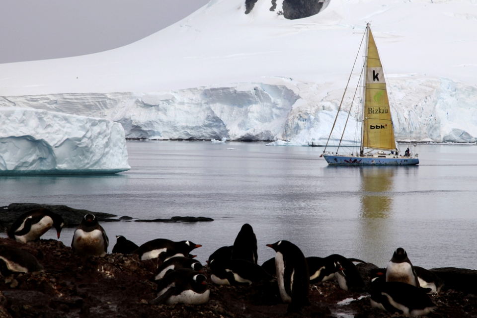 Embracing the immensity, just sea, snow and penguins.