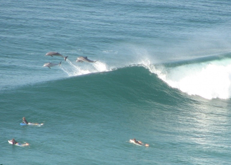DSM's photo of Byron Bay