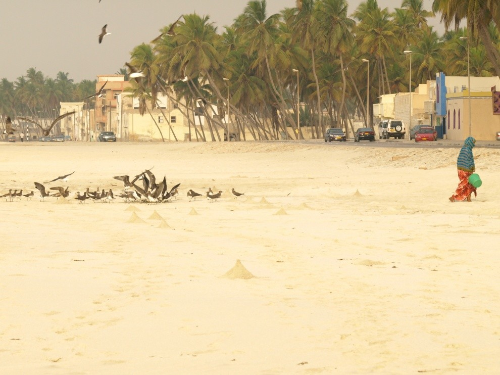 John Steel's photo of Salalah