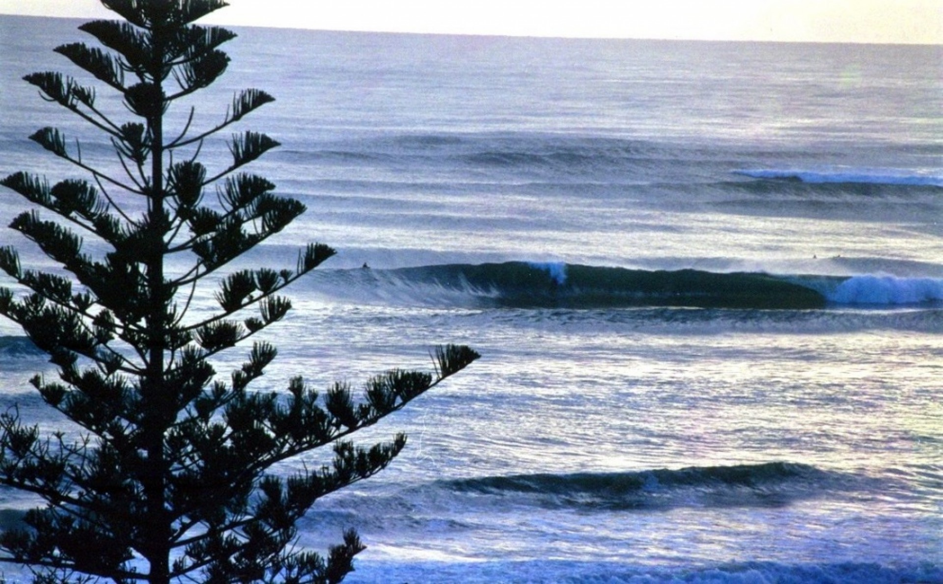 temp38273's photo of Snapper Rocks