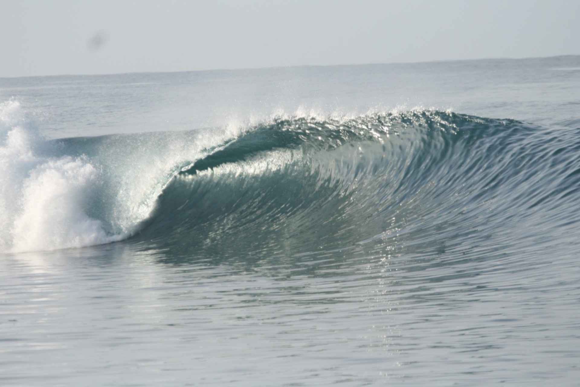 shore break kid 's photo of Macaronis