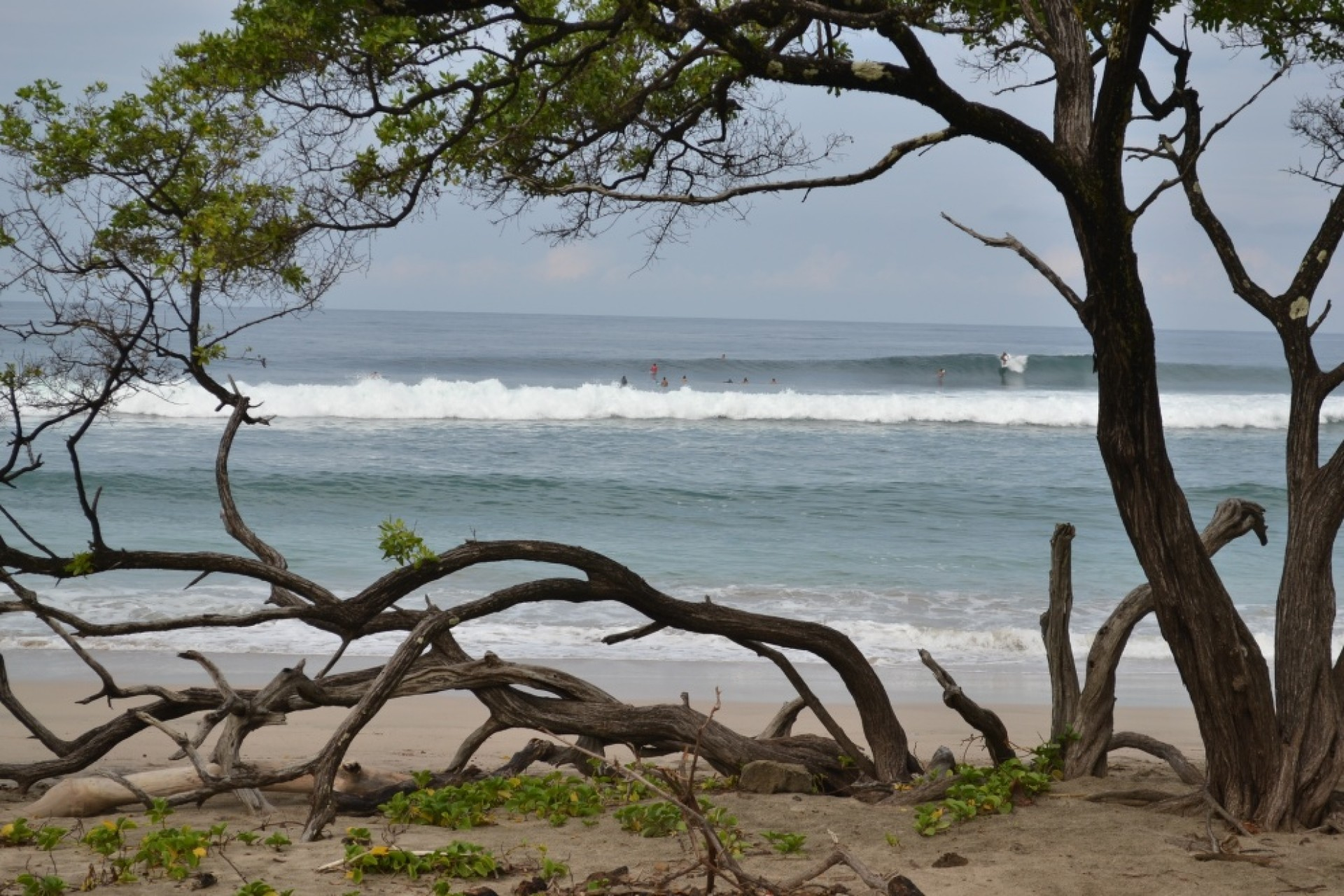 GreenTeam's photo of Playa Negra - Guanacaste