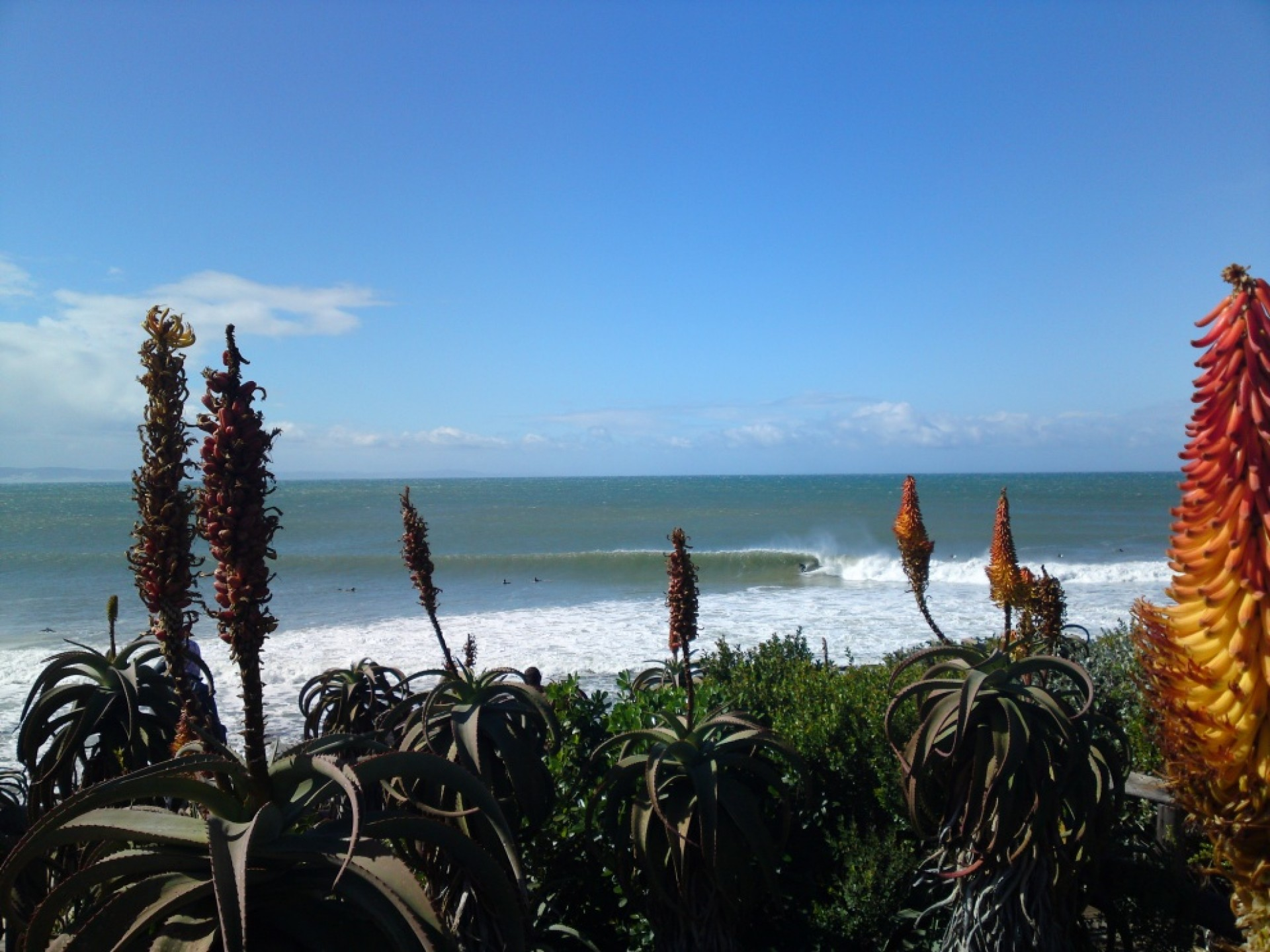 Wern of the Cape's photo of Jeffreys Bay (J-Bay)