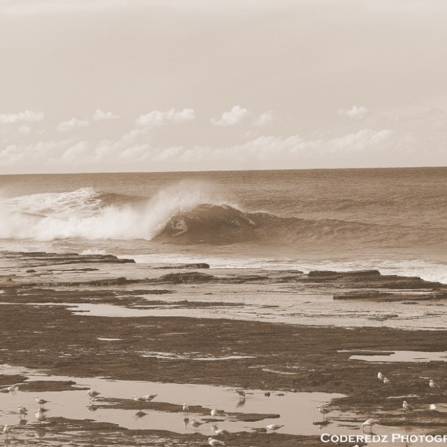 Photo of Coalcliff Reef