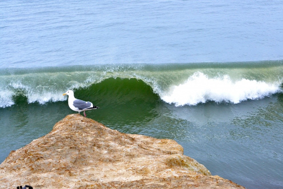 localSC's photo of Steamer Lane