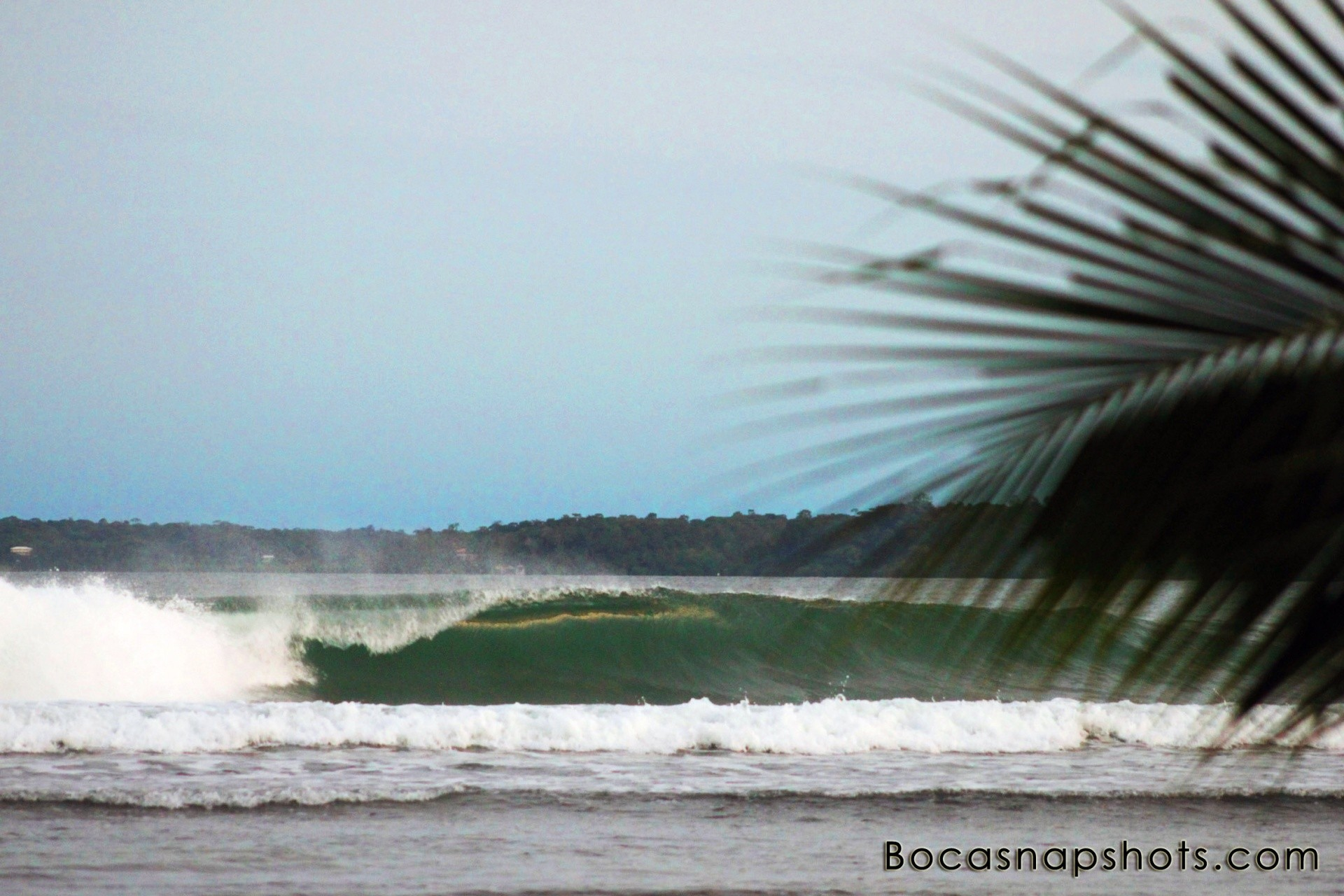 bocasnapshots's photo of Careneros