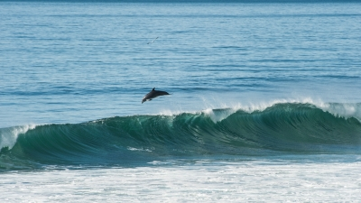 Photo of Torrey Pines/Blacks Beach