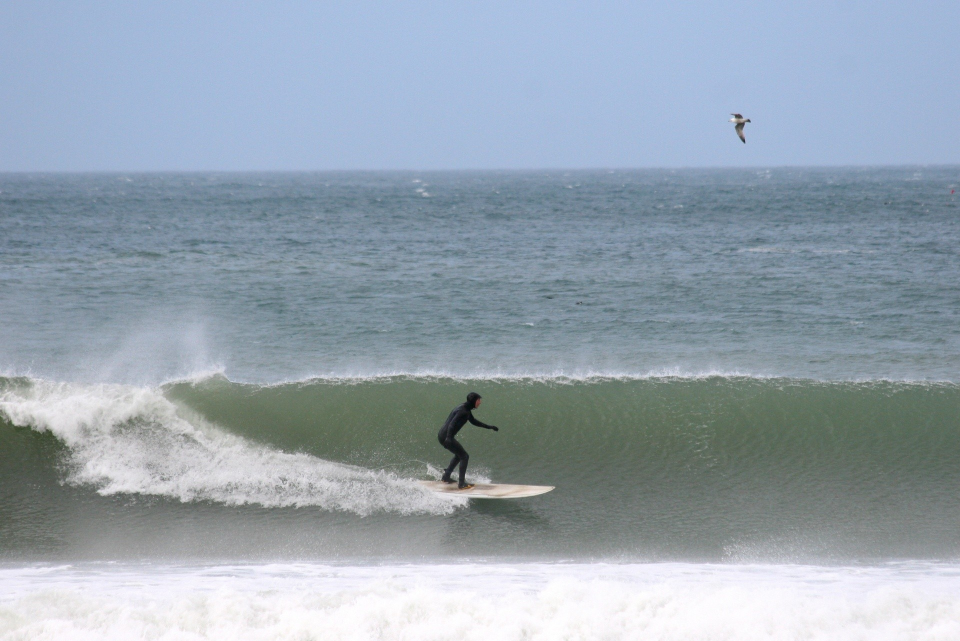 Surf Scenes's photo of Newquay - Towan / Great Western