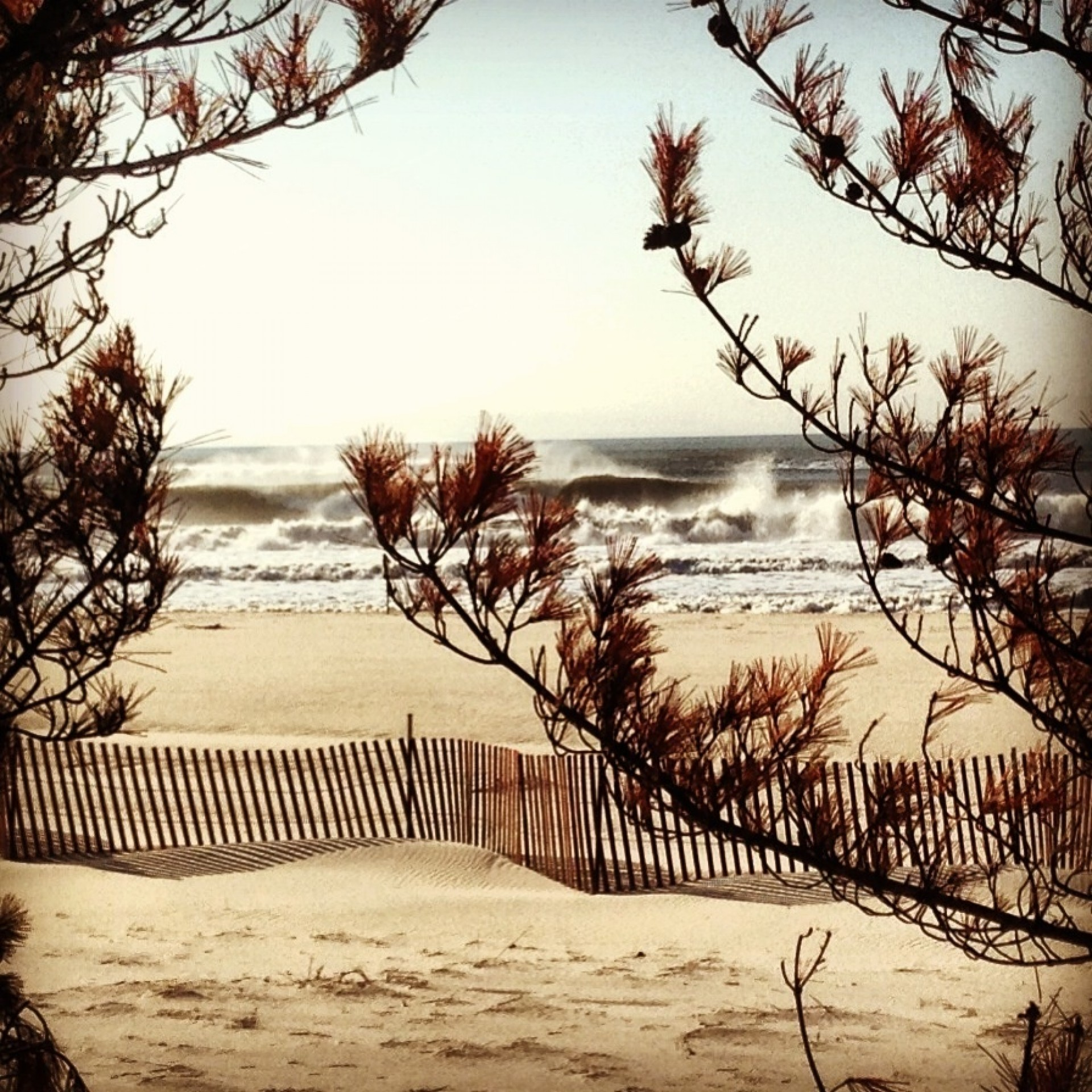 Johnny Huber's photo of Fire Island