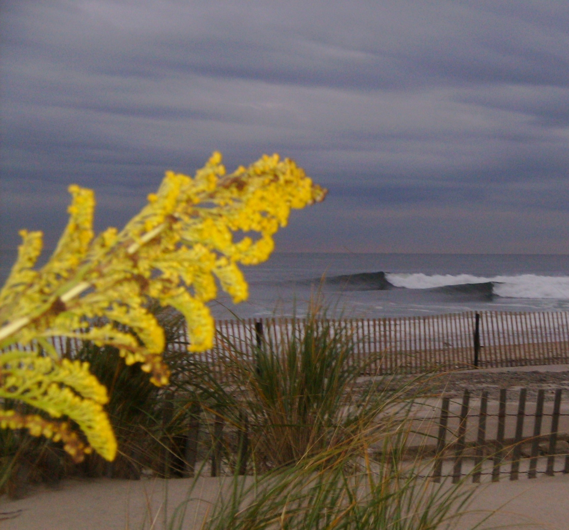 Dean O'Keeffe's photo of Belmar