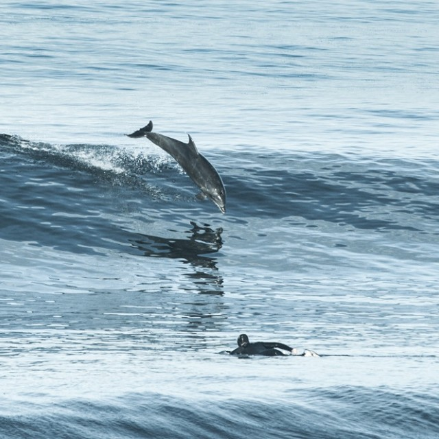 Magicseaweed Photo of the Day of Torrey Pines/Blacks Beach