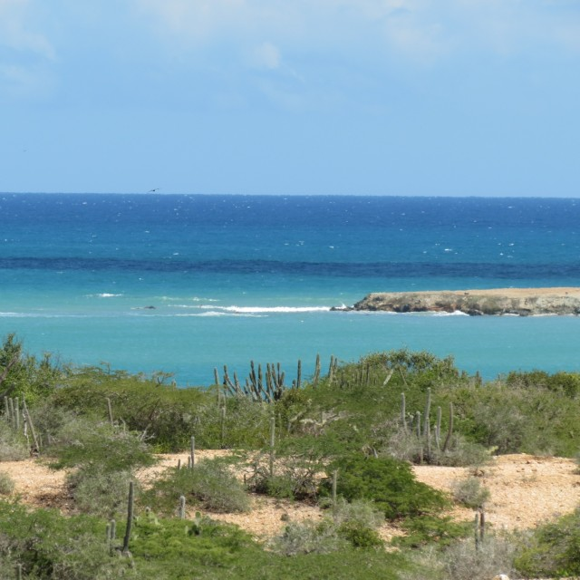 Photo of Punta Arena