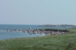 Photo of Popham Beach