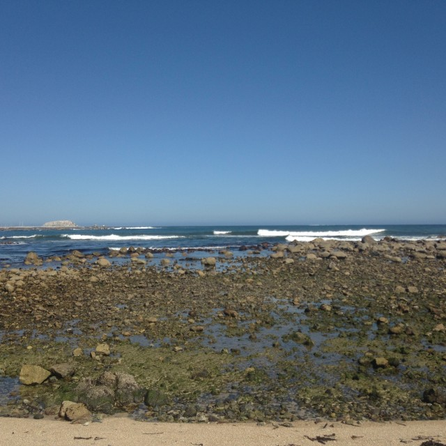 Photo of Algarrobo