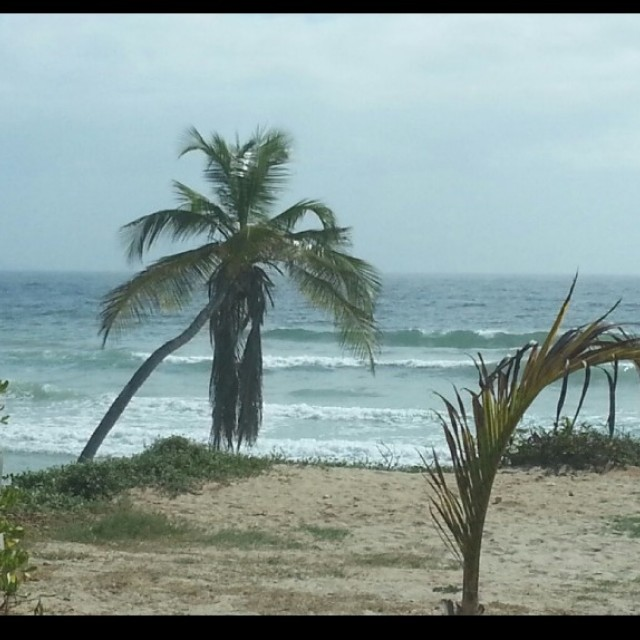 Photo of Guacuco