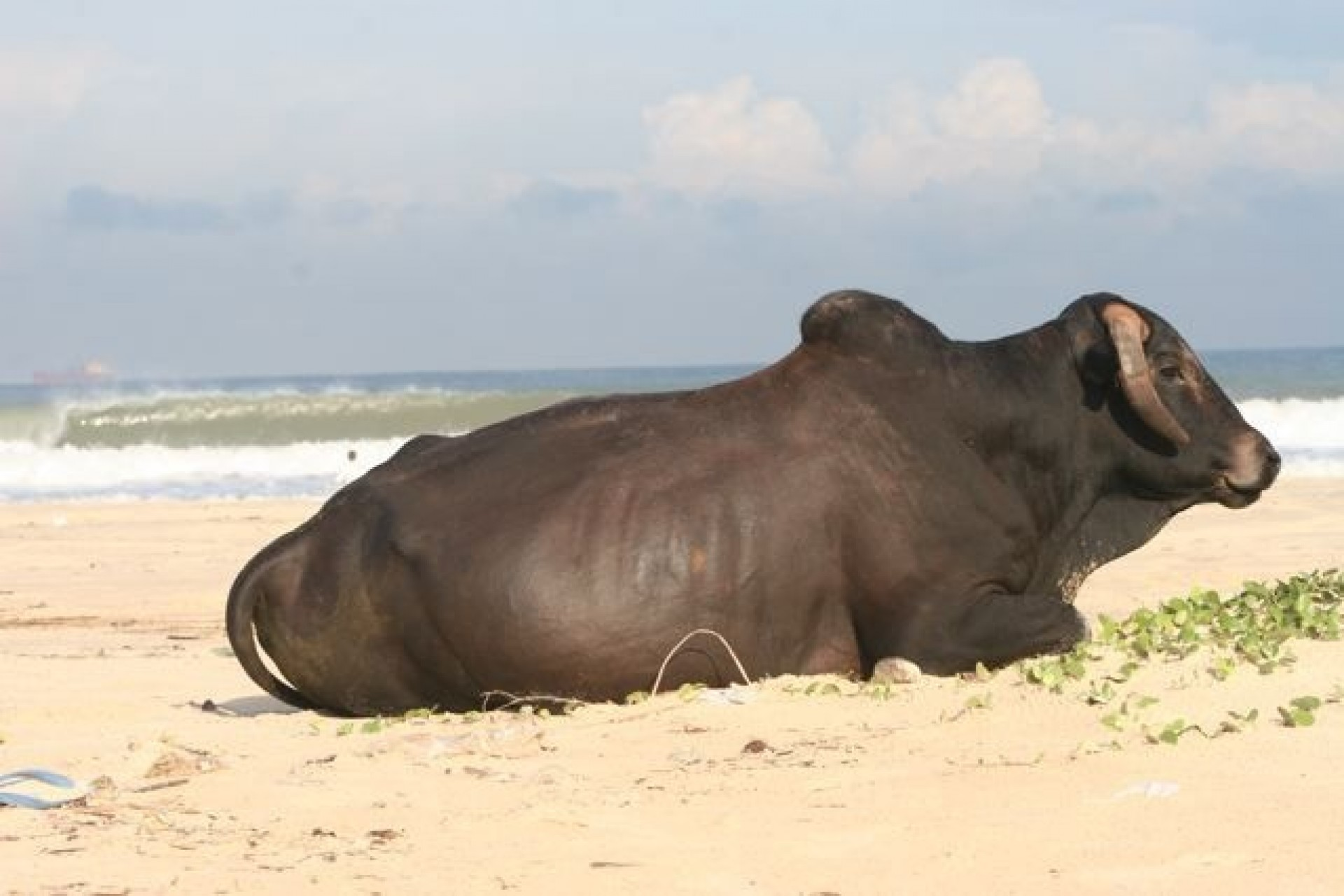 Swami's photo of Baga Beach