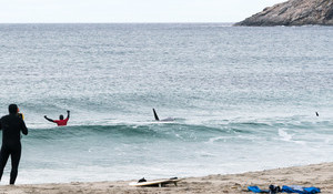 Norway Orcas: Claiming Stud is Double Shark Attack Survivor