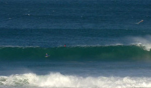 J-Bay Called off Today Due to Shark Breach