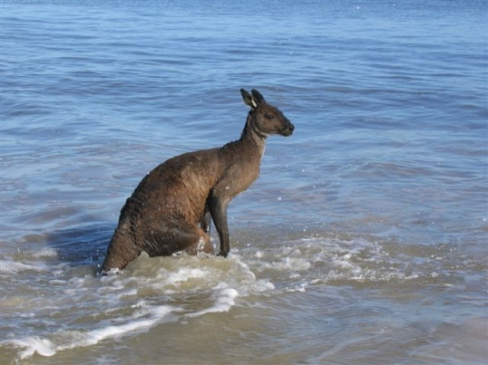 Nah, think I'll just body surf ... Roo
