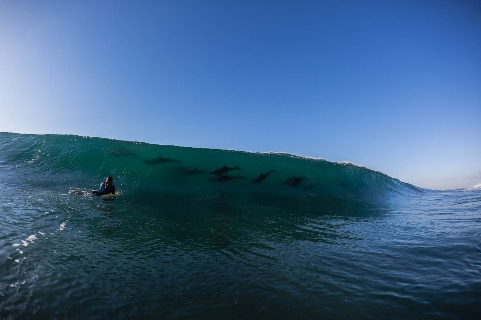 Dolphins in Durban - this is an everyday occurrence in Africa where the wildlife is as abundant as the surf.