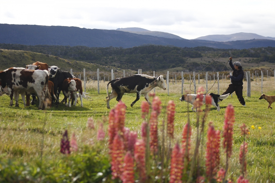 "Across Patagonia we met ""gauchos"" (cowboys), seaweed workers, farmers producing and harvesting their crops as in the old times, with no machinery at all. As if time had not reached these isolated places and the way of living has remained happy, simple and bound together by the community."