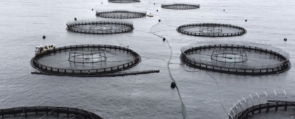 How the fish farm in question could look.