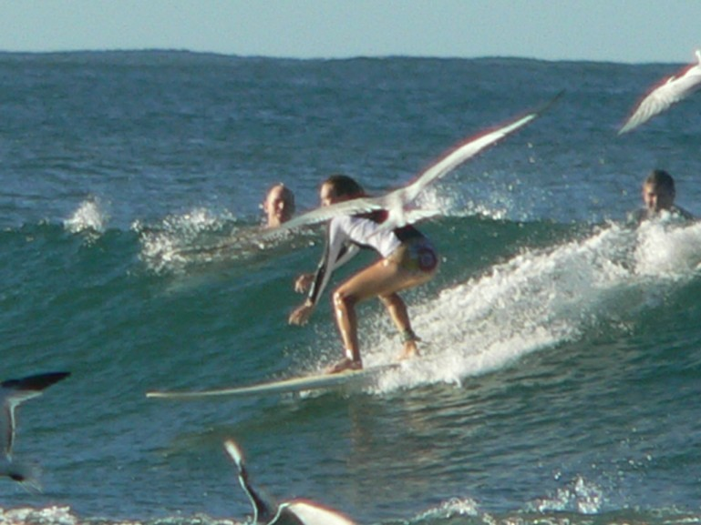 Lou Maresca's photo of Tamarindo