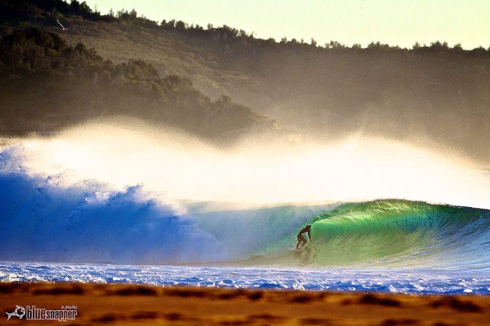 bluesnapper.com.au's photo of South Narrabeen