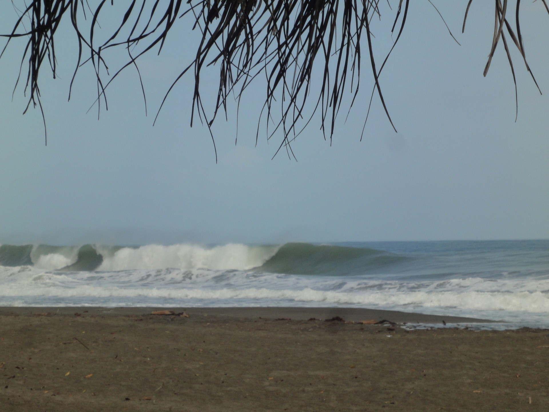 Jaun-Deo Jardine's photo of Playa Negra - Limon