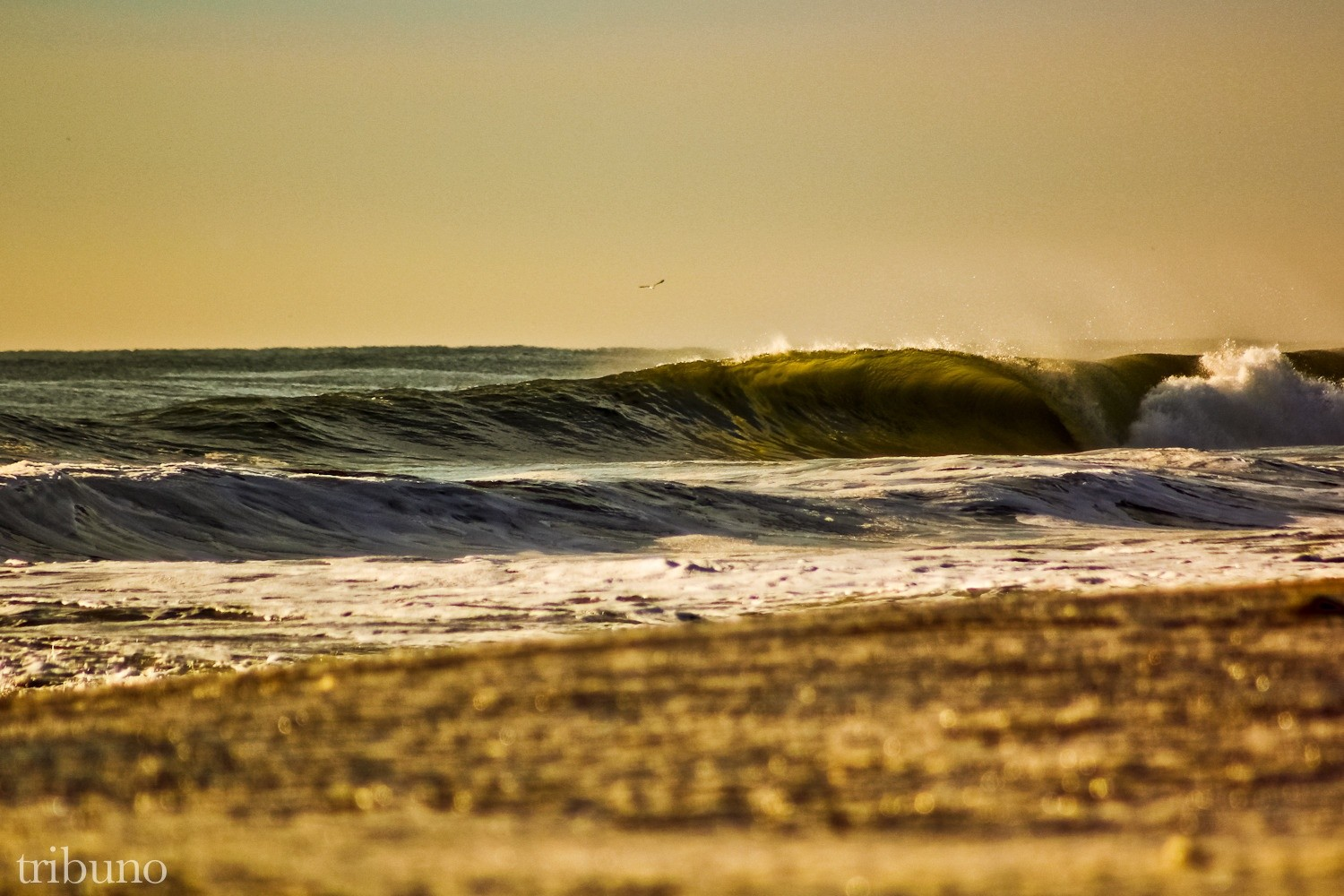 nicktribuno's photo of Ocean City, MD